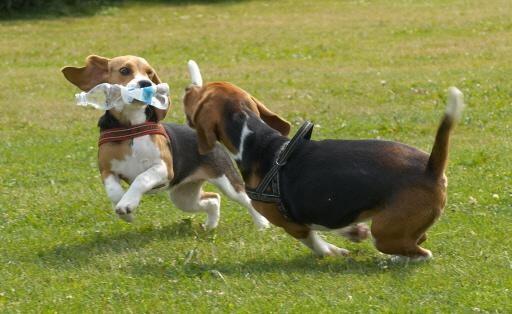 Baasjes betalen in Uitgeest straks geen hondenbelasting meer