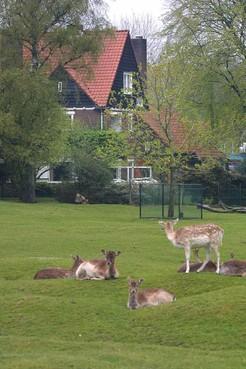 'Kijk nu een serieus naar parkeergarage onder hertenkamp Laren'