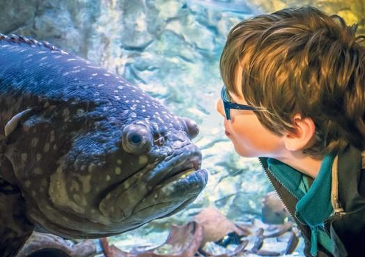 Verstoppertje spelen tussen de vissen van Zee Aquarium Bergen aan Zee