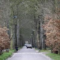 De boomrijke Eemnesserweg.