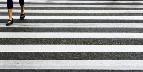 CDA: 'Nieuwe telling bij zebra's op Oosthoutlaan Teylingen'