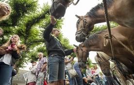 De laatste jaren nam het aantal aangevoerde paarden op de paardenmarkt van Voorschoten af.