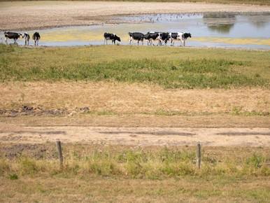 Ondanks regen houdt droogte aan