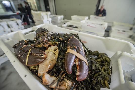Krabben en kreeften worden met enige dwang afgevoerd van het Leidse 'marktmenu'