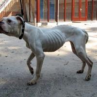 Verwaarloosde hond gevonden in het Darwinpark in Zaandam
