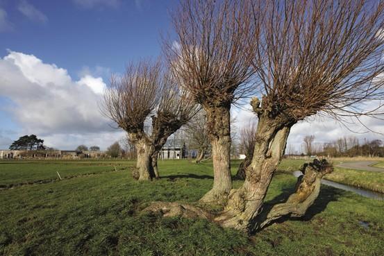 Natuurorganisatie waarschuwt: veel power nodig om natuurgebieden Noord-Holland fors uit te breiden