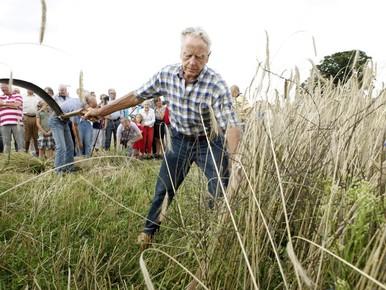 Rogge-oogst nu enkel nog voor de lol in Soest