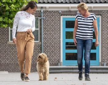 Schoolhond Bobby helpt basisschoolkinderen bij het lezen en algemene ontwikkeling