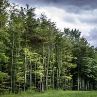 Bomen zullen worden gekapt om nieuwe bomen de ruimte te geven.