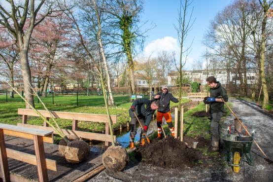 Wijkpark Landsmeer krijgt 23 vervangende bomen
